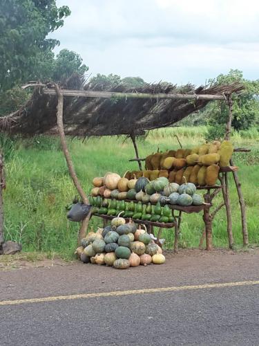 Ein Obststand mit Kürbissen, Avocados und Jackfruits an der Strasse bei einer Exkursion nach Zomba.