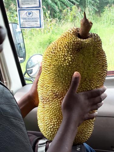 vom Stand gekaufte Jackfruit