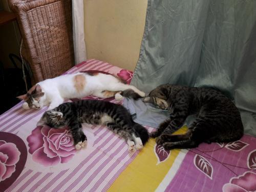 Katzen sind hier nicht anders als bei uns.