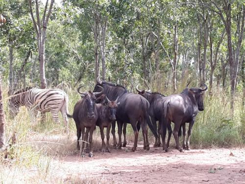 Am Sonntag Vormittag war noch mal Safari.