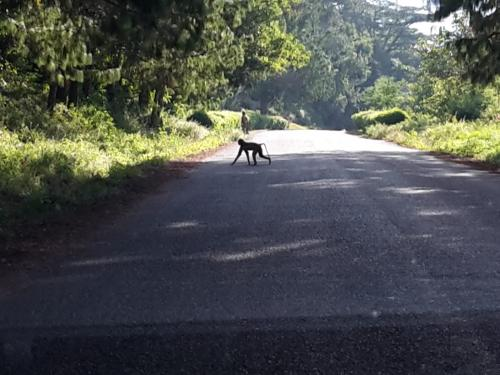 Am  Sonntag Nachmittag ging es dann über das Zomba-Plateau wieder zurück zur Farm.