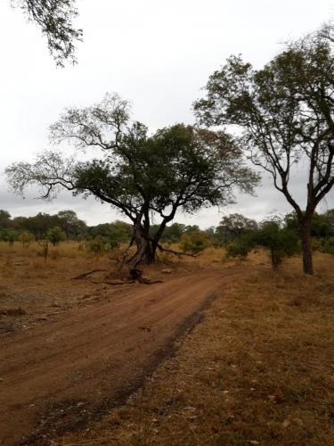 Am Jeep-Safari-Tag hat es ungewöhnlicherweise den ganzen Tag genieselt ...