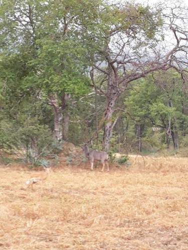 Vor dem Baum ist eine Kudu-Antilope und links unterhalb eine Gazellenart.