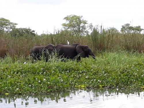 Der weisse Vogel auf dem Elefant ist ein Kuhreiher - er frisst u.a. Parasiten aus Hautwunden von (Gross-)Tieren.