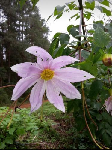 Eine schöne Blume am Wegesrand.